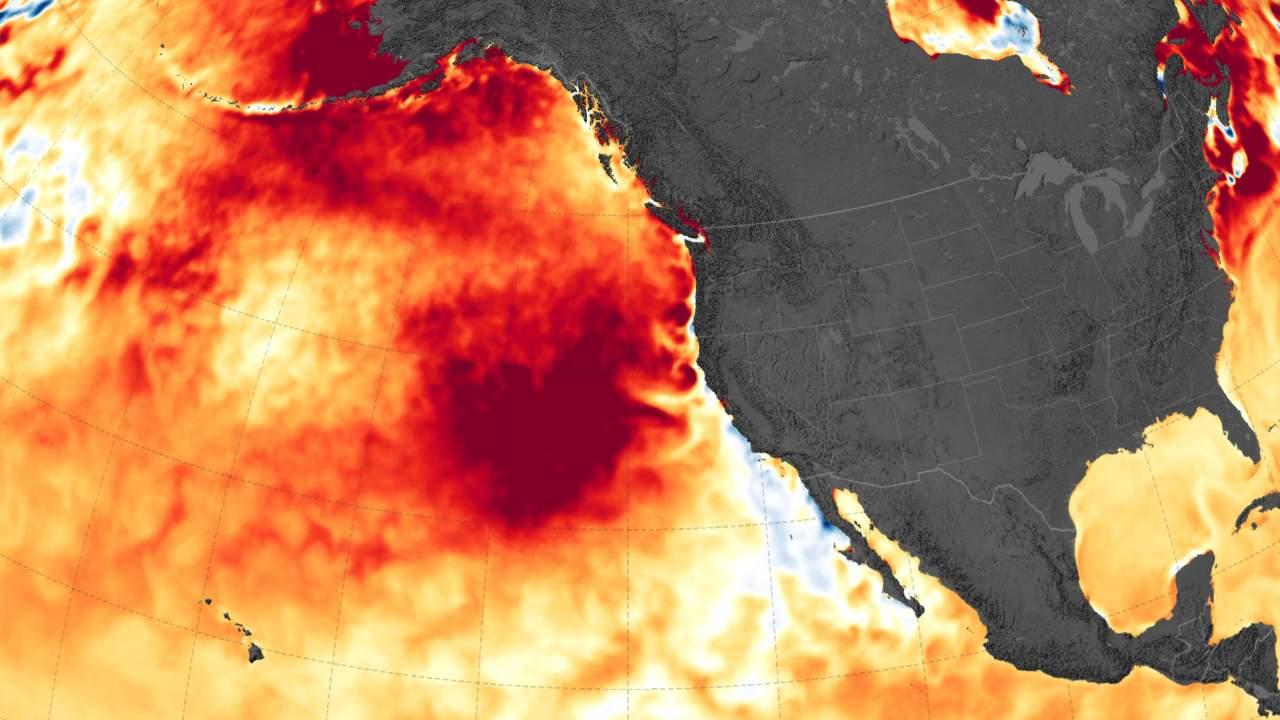 Тепловая аномалия, волна «Blob»