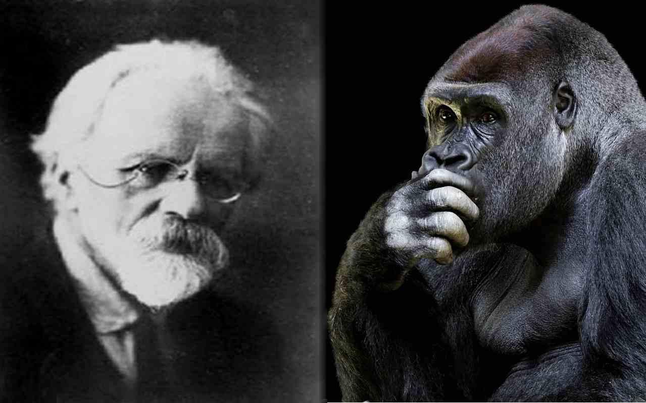 Опыты по скрещиванию человека и обезьяны