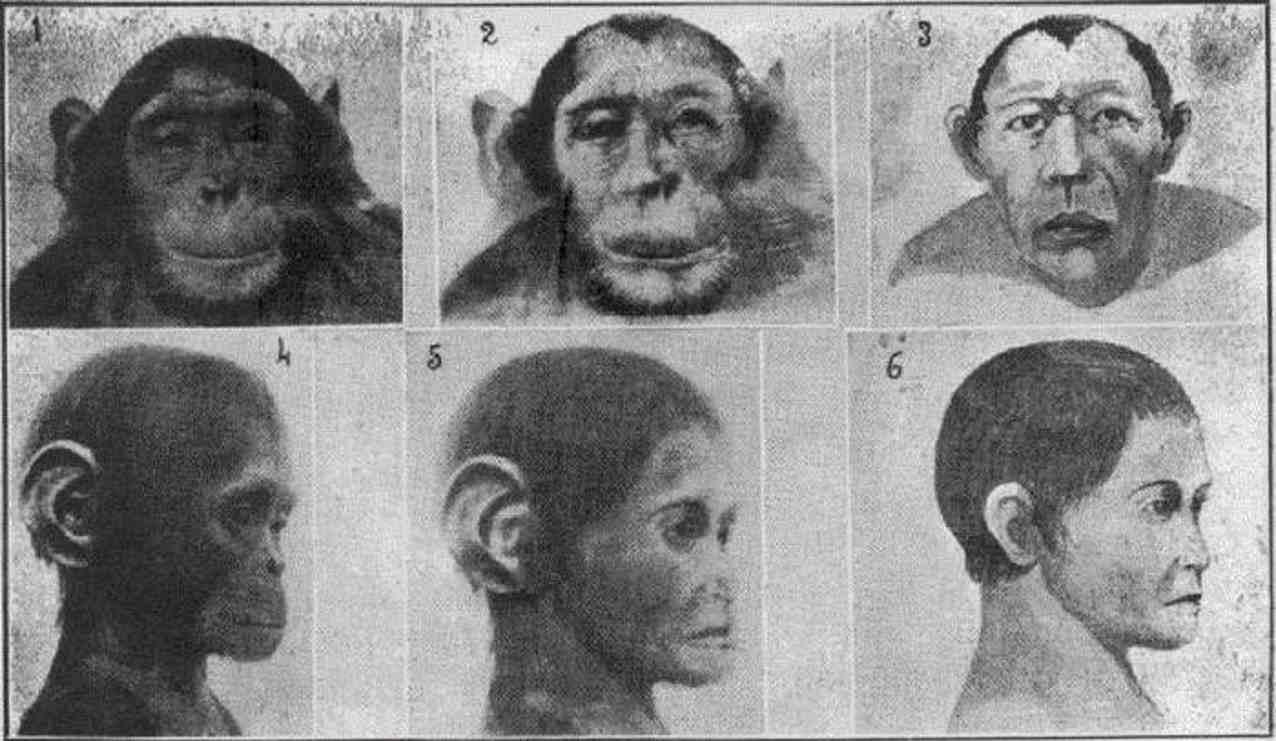 Люди обезьяны