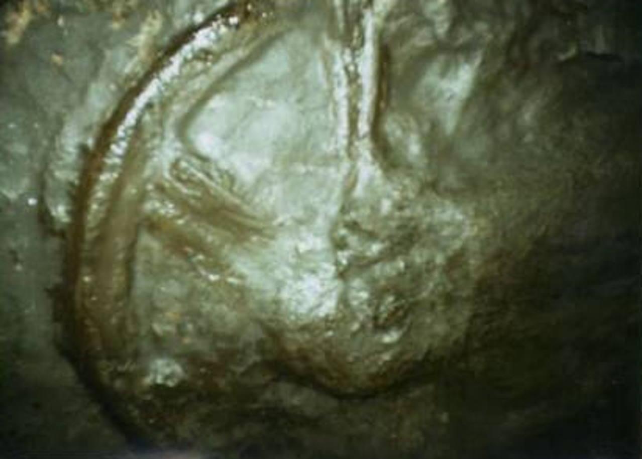 Колесо возраст 300 млн лет