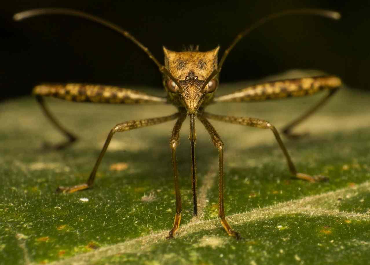 Генетически модифицированный комар