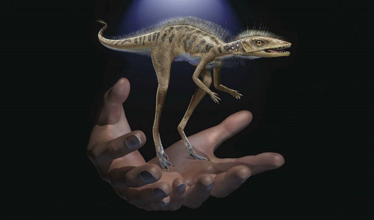 Kongonaphon kely - Миниатюрный динозавр