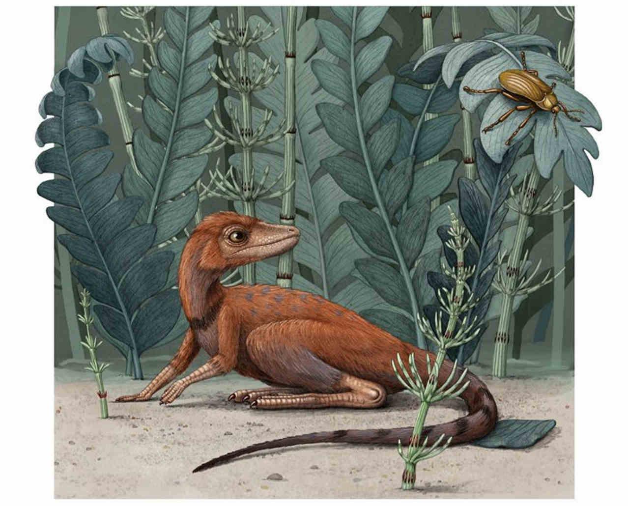 Kongonaphon kely / ©Alex Boersma, American Museum of Natural History